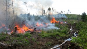 Up to the 1970's, controlled burning was a standard method of soil preparation in forest regeneration. Photo: Risto Höglund