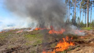 If there are no natural boundaries, a treeless zone has to be cleared around the edges as a fire alley. Photo: Risto Höglund