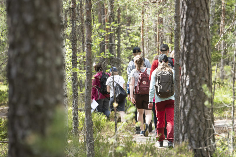 A group of Forest Quiz finalists completing the trail. Photo: Vilma Issakainen